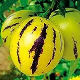 Qulista Samenhaus - 20pcs BIO Melonenbirne Pepino ertragreich aromatisch Saatgut Obstsamen winterhart für Balkon und Mini-Garten