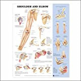 Shoulder and Elbow Anatomical Chart