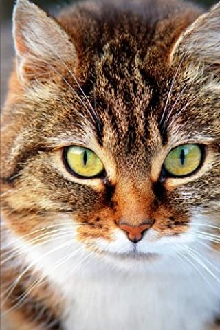 A Beautiful Green-Eyed Domestic Shorthair Cat Pet Journal: 150 Page Lined Notebook/Diary