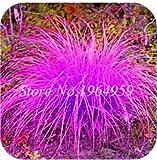 Pinkdose 100 Teile/beutel Bunte Schwingel Gras Bonsai Indoor Garten Festuca Mehrjährige Winterharte Zierpflanzen Einfach Wachsen Bonsai Sementes: 15