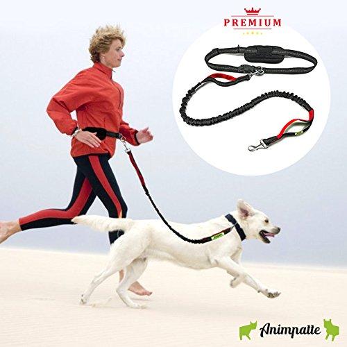 laisse-jogging-main-libre-pour-chien-haut-de-gamme-extensible-jusqua-220-cm-sacoche-telephone-18cm-r