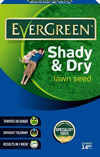 evergreen-shady-and-dry-lawn-grass-seed-carton-420-g