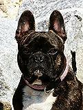 Halsband Leder Püppi Braun Rosa Glitzer S o M Lederhalsband Breit Tysons Hundehalsband (S)