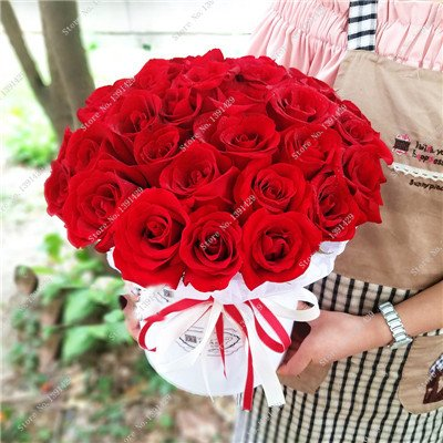 Exotique Rosas / Rose semences vivaces Jardin des plantes Bonsai Fleur, Pots de fleurs Pots décoratifs Aménagement paysager 120 Pcs / Sac 10
