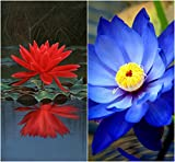 #5: Bee Garden Organic Lotus Flower Seeds 10Pcs - Red & Blue Colors