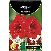 Bulbos - Amarilis rojo - Batlle