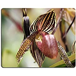 luxlady Gaming Mousepad-ID: 40834983 Paphiopedilum Orchidee