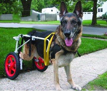 Ajustable para silla de ruedas para perro (L), peso 60to 100libras, patas...