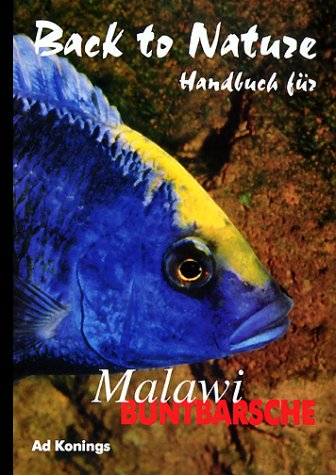 Malawibuntbarsche