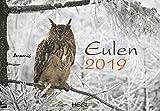 Eulen 2019: Der Sympathische Eulen-Kalender mit den charmanten Namen