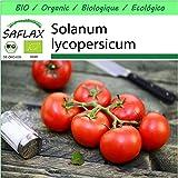 SAFLAX - - BIO - Pomodoro - Matina - 10 semi - Solanum lycopersicum