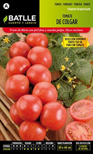 semillas-batlle-tomate-de-colgar-domingo
