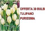 OFFERTA 30 BULBI AUTUNNALI TULIPANO FOSTERIANA PURISSIMA BULBS BULBES