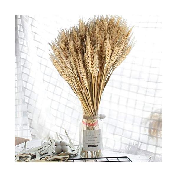 naturales Trigo Deko secas. Flores Decoración de hierba Bouquet para Blumenstrauß, Requisiten, flores artificiales y…
