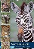 Dreikäsehoch - Tierkinder im südlichen Afrika (Wandkalender 2019 DIN A2 hoch): Nachwuchs in den Nationalparks (Monatskalender, 14 Seiten ) (CALVENDO Orte)