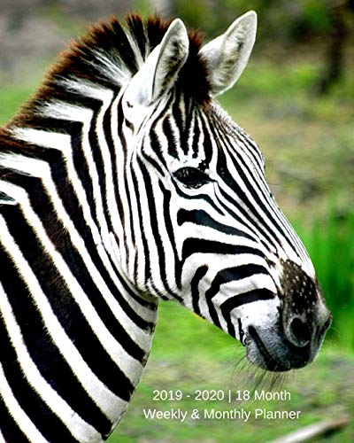 2019 - 2020 | 18 Month Weekly & Monthly Planner: July 2019 to December 2020 | Calendar in Review/Monthly Calendar with U.S./UK/ ... 8 x 10 in.-Zebra Animal Safari Vol 9 Volle Zebra