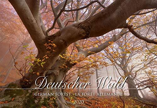 Deutscher Wald 2020 - Bildkalender quer (50 x 34) - Bäume - Wald - Landschaftskalender - Natur - Wandkalender