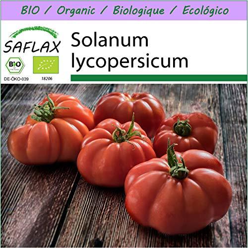 SAFLAX - Ecológico - Tomate - Rouge de Marmande - 10 semillas - Solanum lycopersicum