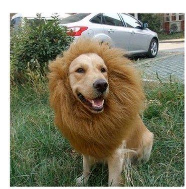 Hundekostüm Löwenmähne für Hunde (Halsumfang bis ca. 70cm) (Hundekostüme)