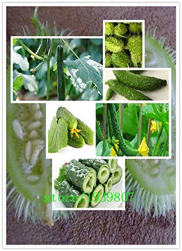 100% de vrais graines de concombre rouge jaune blanc concombre sept sortes de fruits et légumes du jardin choix balcon - 100pcs