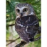 DIY Volle Bohrmaschine 5D DIY Diamant Malerei Big Eye Owl Tier Stickerei Kreuzstich Strass Mosaik Malerei Geschenk 30x40cm