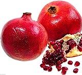#9: Rare Dwarf Pomegranate from Jerusalem Israel Punica Granatum 30 seeds