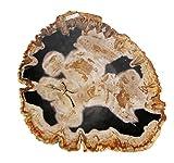 Ramo di legno pietrificato FOSSILE 30 cm alto, 5 CM DIAMETRO PESO 0.8 Kg