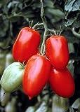 Tropica - Tomaten - San Marzano (Lycopersicon esculentum) - 10 Samen - San Marzano Tomate