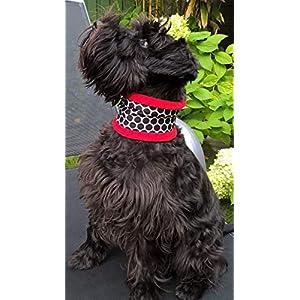 Hundeloop, Hundeschal, Hundeschlauchschal mit schwarzen Punkten
