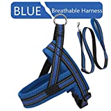 LUCYPET Reflektierende Leine Polyester-Bandseil Breathable Soft Harness Trainings-Set Laufen ohne Zuggeschirr für kleine mittelgroße Hunde - Blau,XXL