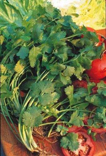 Il vous suffit de graines fines herbes???Coriandre Leisure???Coriandrum Sativa Leisure '? 100?graines Petit Lot