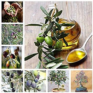 vonly Beförderung! 15 PC Rare Olive Bonsai-Baum (Olea europaea) Mini-Baum Pflanze für Hausgarten-Zubehör, exotische Blumentöpfe Pflanz: Gemischt