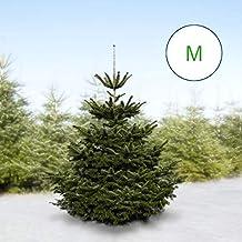 Echte Tannenbaum Kaufen.Suchergebnis Auf Amazon De Für Tannenbaum Echt