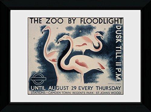 GB Eye Ltd Transport for London, Le Zoo par Floodlight, encadrée, 50 x 70 cm, Bois, différents, 55 x 75 x 2.9 cm