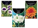 Bulbos de flores variadas Amarilis, Dalia, y Calla.