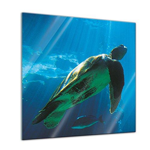 Glasbild mit Winter SALE - Schildkröte - - 30 x 30 cm - Deko Glas - Wandbild aus Glas - Bild auf Glas - moderne Glasbilder - Glasfoto - Echtglas - kein Acryl - Handmade
