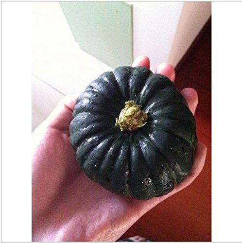 graines de fruits 15pcsVegetable Les graines de citrouille japonais noir Bonsai plantes semences pour maison et jardin 20seeds / sac