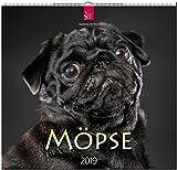 MF-Kalender MÖPSE 2019