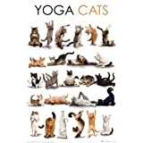Poster - Yoga Cats [Size 61 cm x 91,5 cm]