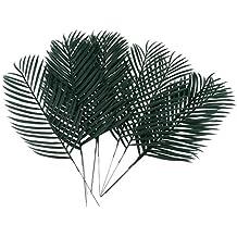 Palmenblätter Deko.Suchergebnis Auf Amazon De Für Palmenblatt Deko