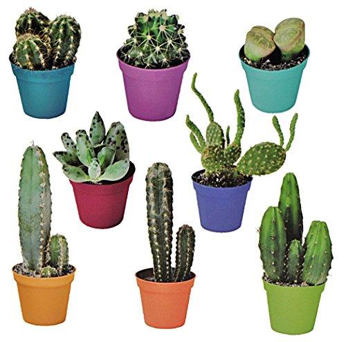 Unbekannt 8 TLG. Set: XL Wandtattoo / Sticker - Kaktus Kakteen Wüste Strauch Blume Blumen Mexiko - Wandsticker Aufkleber -