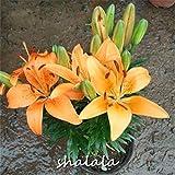Pinkdose vendita calda 200 pz colori della miscela Lily flores peruviano giglio fiore plantas Alstroemeria plante bonsai pianta bel fiore per giardino: 20
