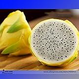 Raras grandes semillas amarillas de la fruta del dragón de Pitaya orgánicos, Paquete Profesional, 30 semillas / Paquete, dulce Selenicereus megalanthus E3267