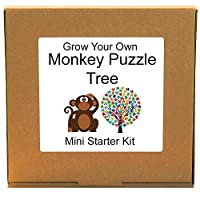 Grow Your Own Monkey Puzzle Tree Growing Kit - Unusual, Unique and Quirky Complete Beginner Friendly Indoor Gardening Gift for Men, Women or Children