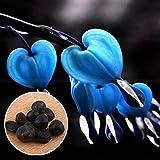 Auntwhale (10 Stück) Purse Peony Seed Blue