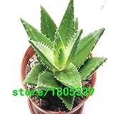 Pinkdose 200 Aloe Seeds Mix - Eccellenti Houseplants succulente ALOE VERA SEED: 2