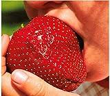 Aimado Seeds Garden- 100pcs Rare Graines de Fraises Géantes Savoureux et Parfumés Bio Fraise Grimpante Graines de Plantes Jardin Légumes Fruits Graine