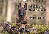 Belgischer Schäferhund - Der Malinois (Wandkalender 2018 DIN A4 quer): Die Facetten einer Hunderasse (Monatskalender, 14 Seiten) (CALVENDO Tiere) [Kalender] [Apr 01, 2017] Brandt, Tanja