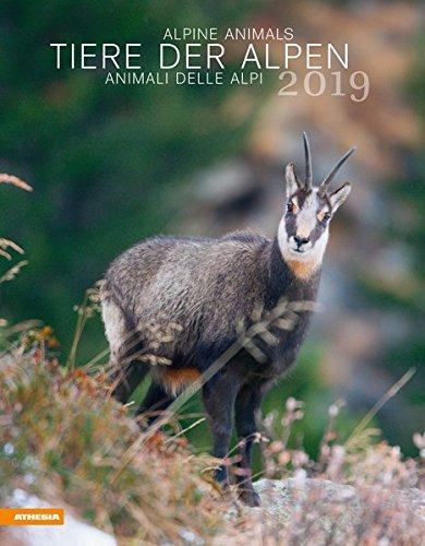 Tiere der Alpen - Kalender 2019 par Herausgegeben von Athesia-Tappeiner Verlag