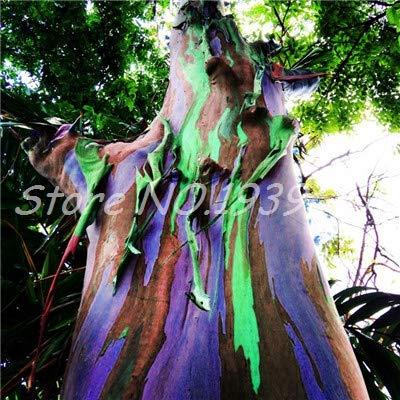 Ventes! 200 pcs/sac Rare arc en ciel, arbre tropical Showy, vivace Bonsai Potted Maison et Jardin (7 ing mixtes GRAINES SEULEMENT)